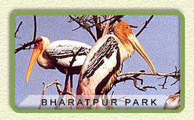 bird watching at Bharatpur National Park